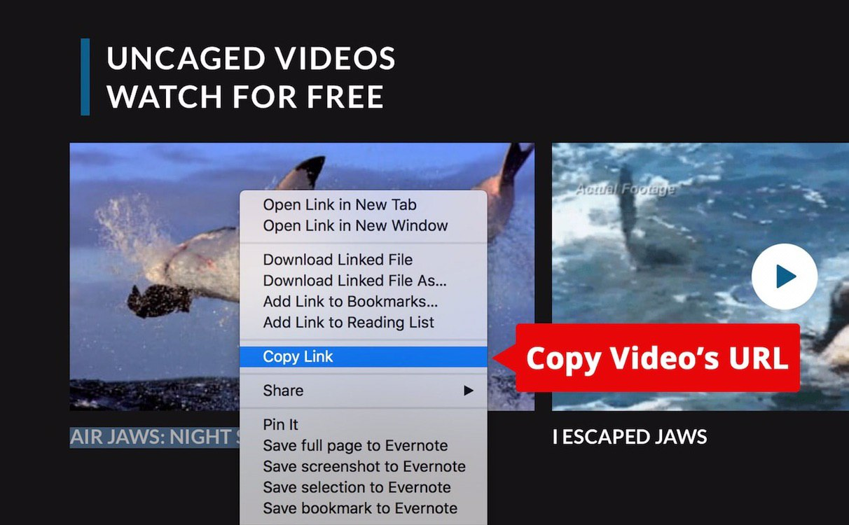 URL Video Downloader to save video from YouTube, Facebook, Instagram